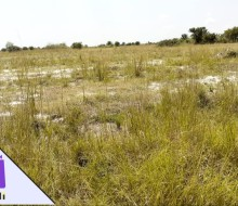 serene-and-gated-community-lands-for-sale-in-prampram-small-0