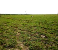 affordable-lands-for-sale-in-tsopoli-small-1